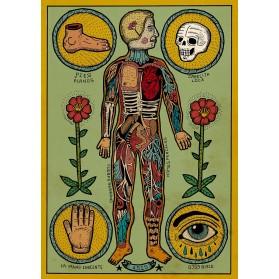 AP Anatomía de un cuerpo sesi